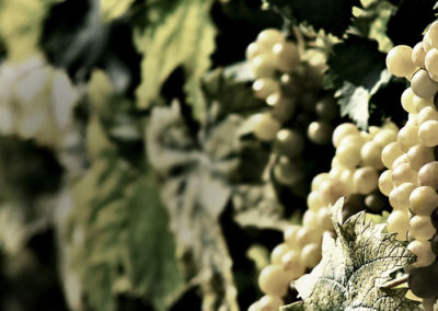 Bottignolo vineyards in Valdobbiadene Treviso